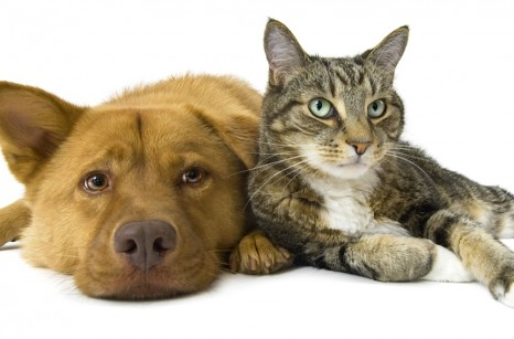 bigstockphoto_Dog_And_Cat_Together_Wide_Angl_5116687