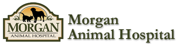 Morgan Animal Hospital - Niagara Falls Veterinary Clinic